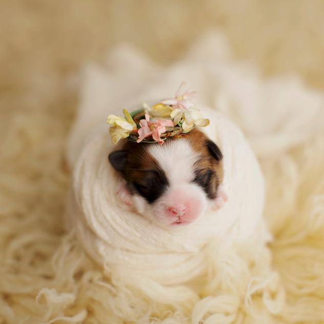 The littlest Princess