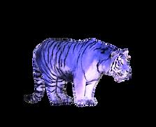 Tiger7.png