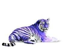 Tiger8_edited.png