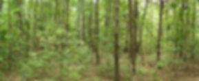 jb_forest_programs_379.jpg