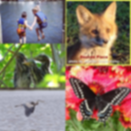 photocontestcollage1W.png