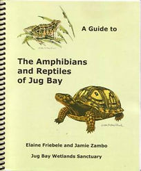 Amphibians_and_Reptiles_of_Jug_Bay_tn_30