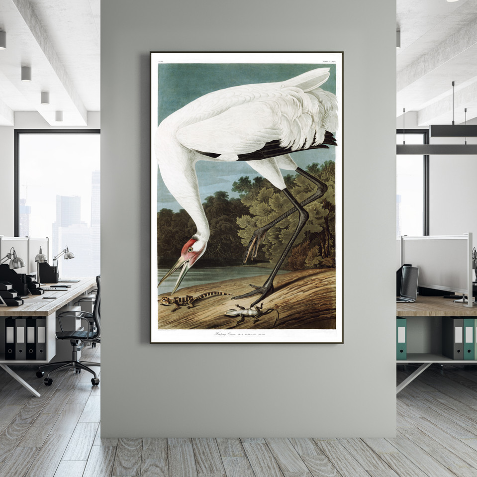 POSTER – Whooping Crane by John James Audubon