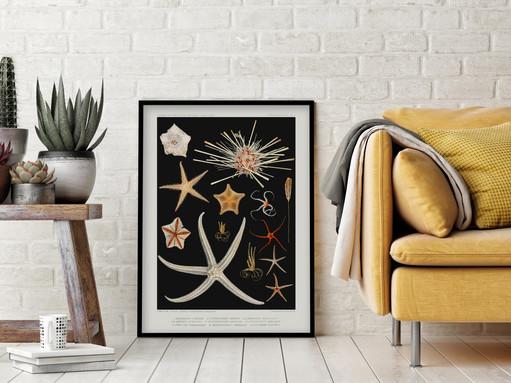 POSTER – Starfish varieties by Albert I, Prince of Monaco