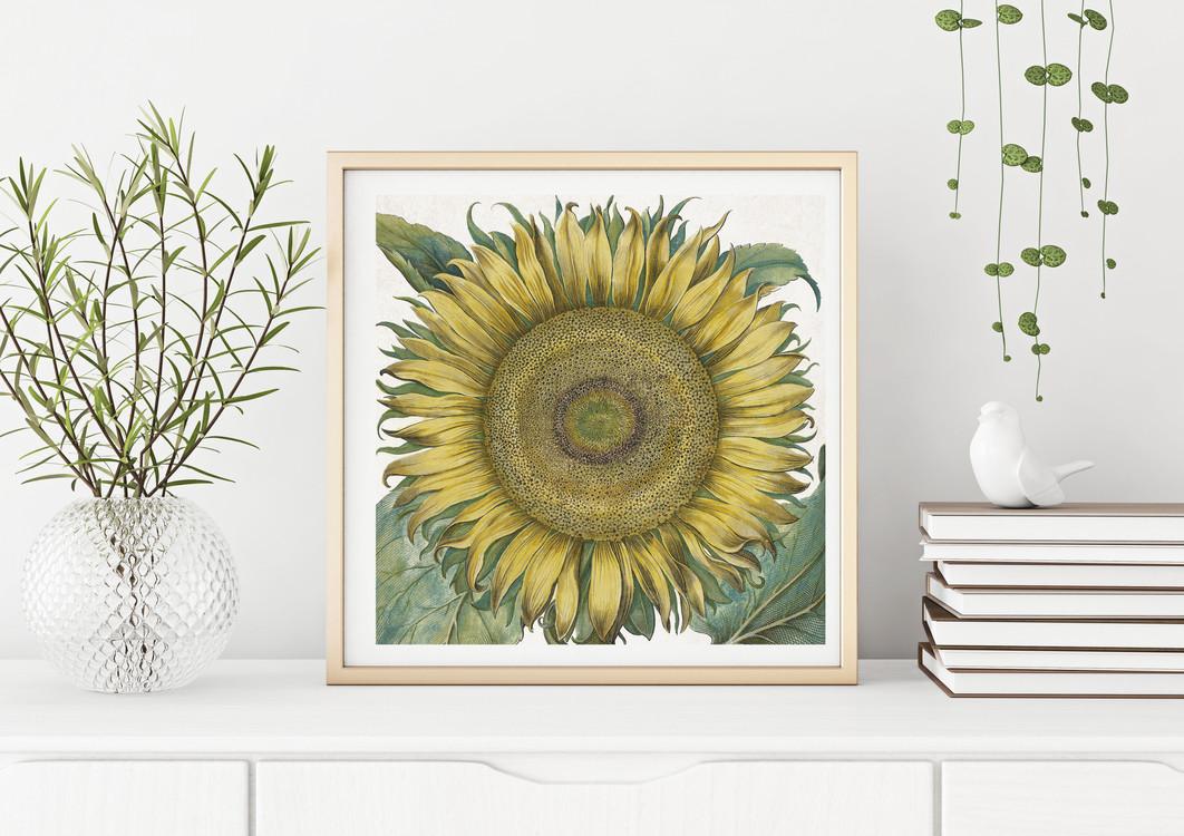 POSTER – Sunflower, Basil Besler