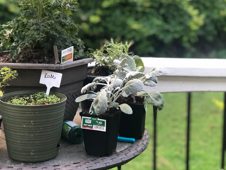 BEST TIPS For Growing a Container Garden