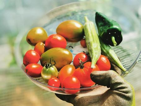 How to start a greenhouse garden (for beginning - intermediate gardeners) part 1