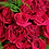 Thumbnail: 50 Stunning Roses