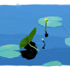 0-11 lily pad thickoil-1.jpg