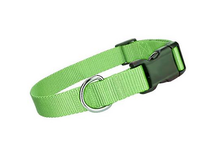 Lime Green Collar \ Leash