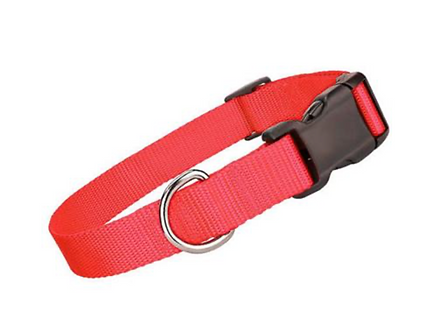 Red Collar \ Leash