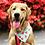 Thumbnail: Watermelon Dog Bandana