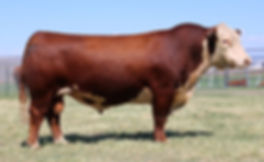 16-12-07-stud-3134a_AI Sire_Reg_43377074