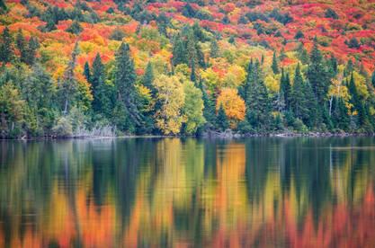Classic Fall Colours