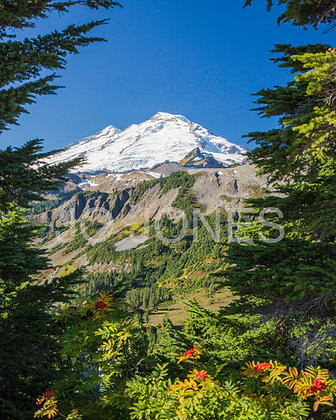 Mount Baker - Fall