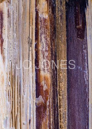 Ancient Wood