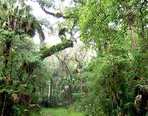 green_swamp2.jpg