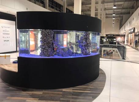 Kolejne wsiedlenie ryb w Galerii Jurajskiej