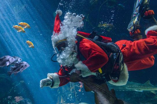 Scuba Claus - Photo Credit Ocean Wise (2