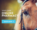 EquineShop_Now_Buttons_2a.png