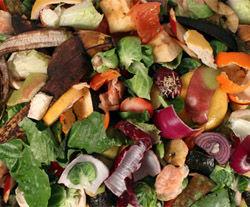 CS_food waste.jpg