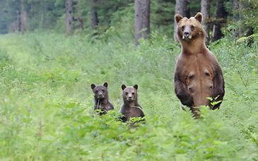N_Catterson_BearBoobs.JPG