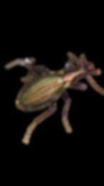 オオルリ-removebg-preview.png