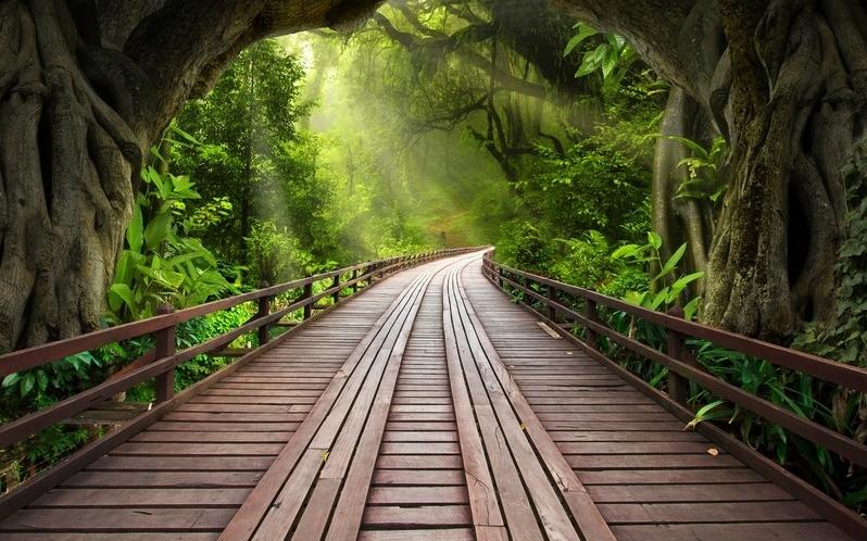 Мост в тропическом лесу