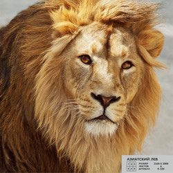 Азиатский лев