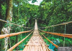 Бамбуковый мост