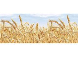 """""""Пшеница"""""""