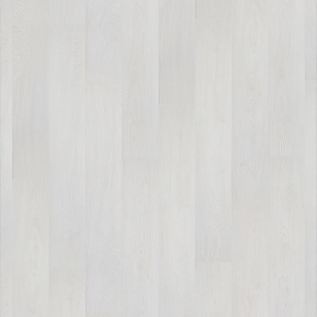 Дуб белый