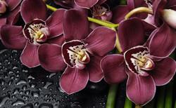 Орхидеи и капли воды