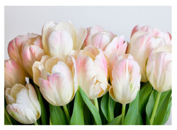 "картина ""Розовые тюльпаны"""