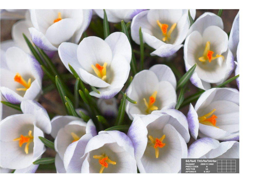 Утренняя весна
