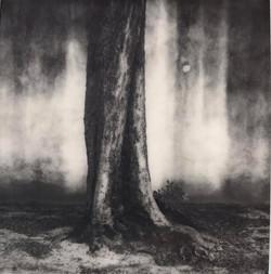 Baum in Bondo