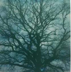 Jura Bäume
