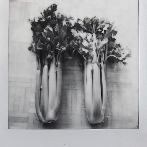 Andrea Haenni -  Sellerie Polaroid SX-70 Scan, Print auf Papier 30x30cm