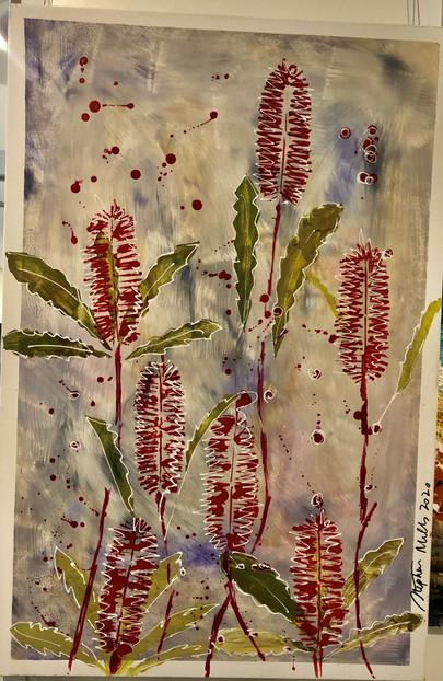 banksias red.jpg