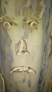 leopard tree face.jpg