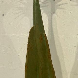 spikey plant.jpg