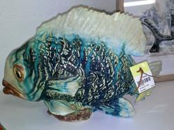 sad sack fish