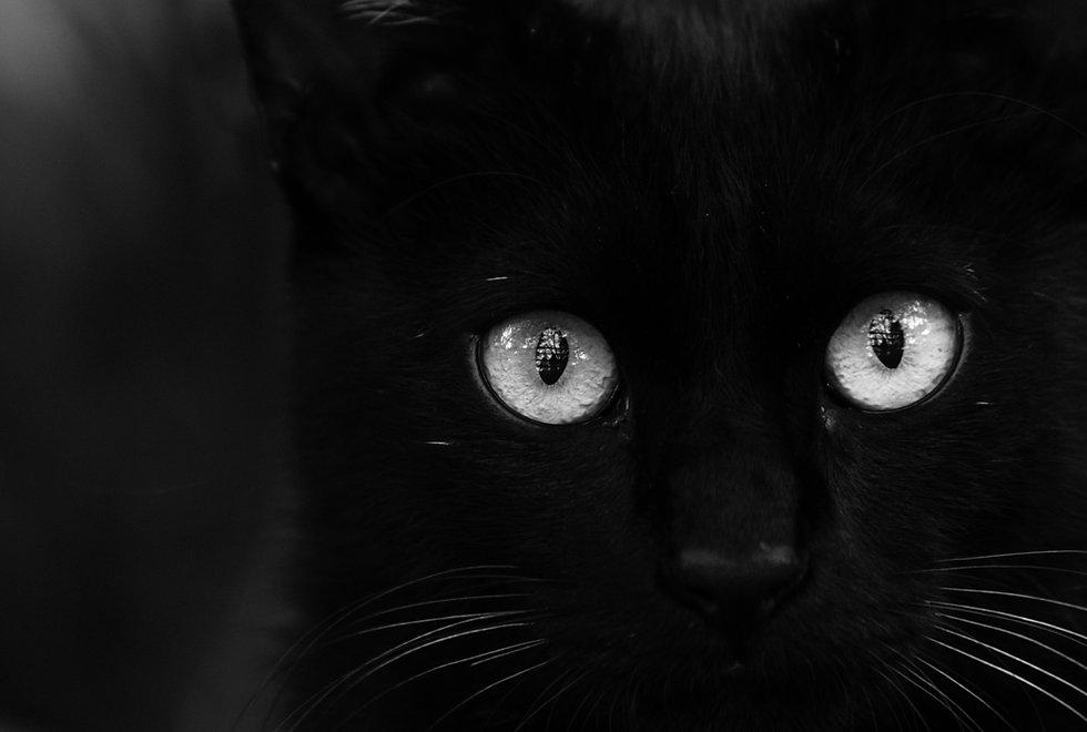 黒猫、さとうゆみ、ねこ、japan、Tokyo、ねこ写真、kawaii、photography
