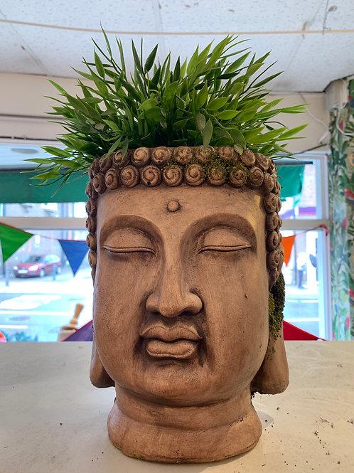 Buddha planter medium