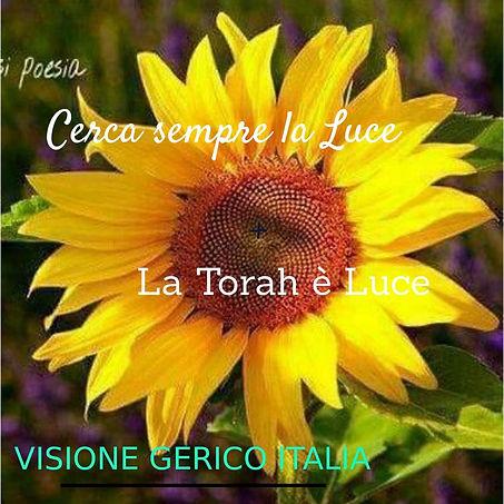 Torah Luce.jpg
