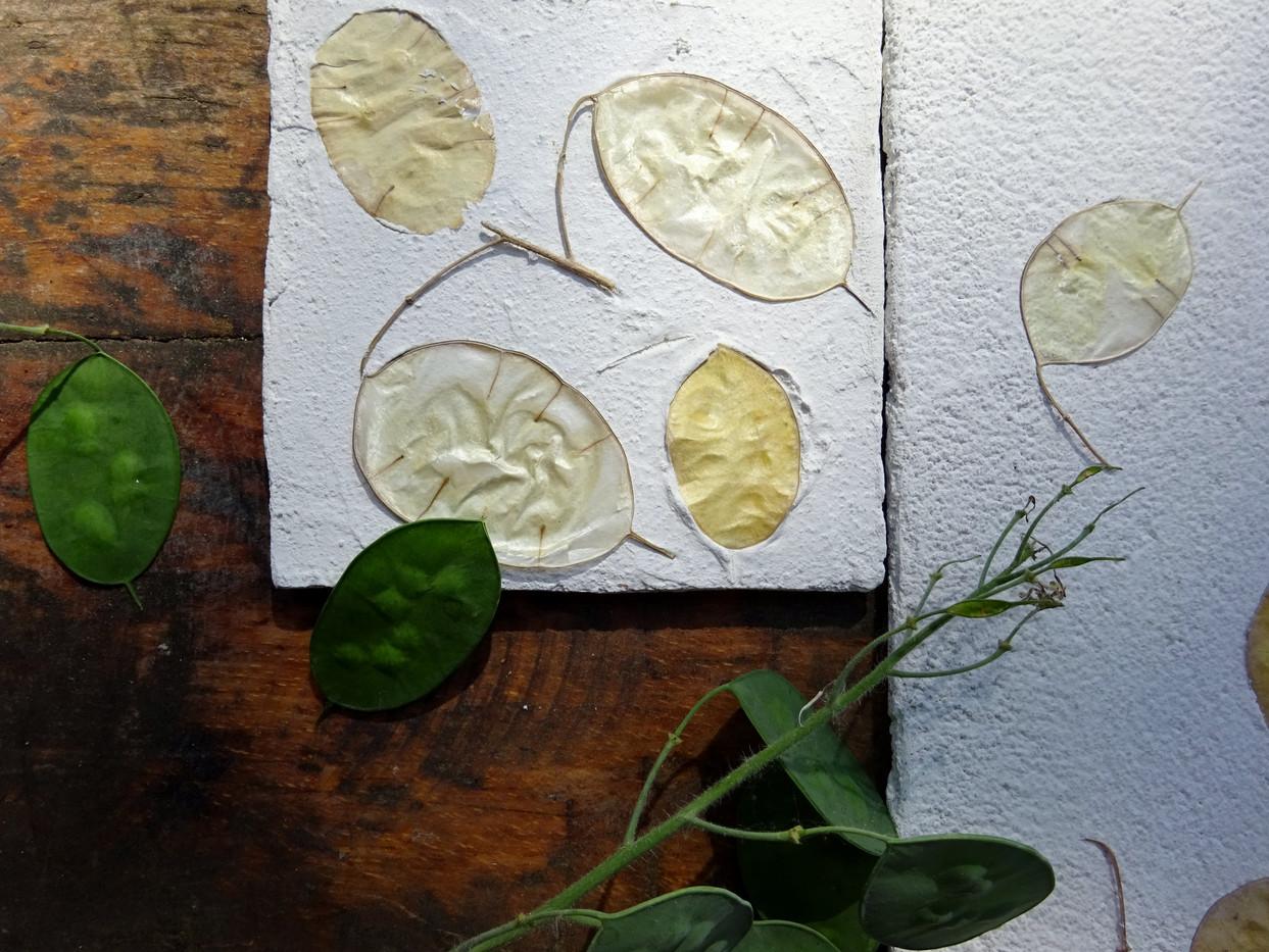 dettagli collezione moneta del papa.JPG
