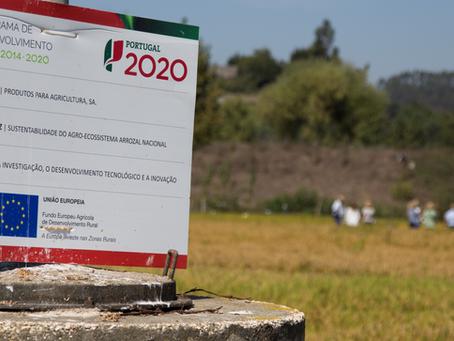 Apresentação dos resultados em Dias de Campo com Cotarroz-CC e DRAP Centro - Ribatejo e Mondego
