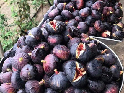 Nothing's better than figs - Greek Figs are among World's Best Superfoods