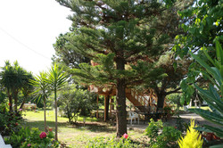 Garden and Treehouse