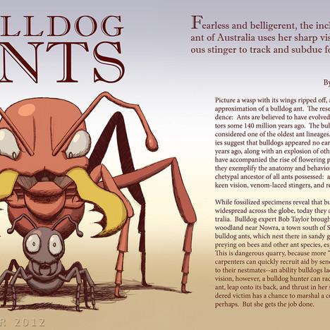 """""""Bulldog Ants"""""""